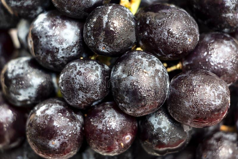 Primer de uvas negras mojadas imagen de archivo