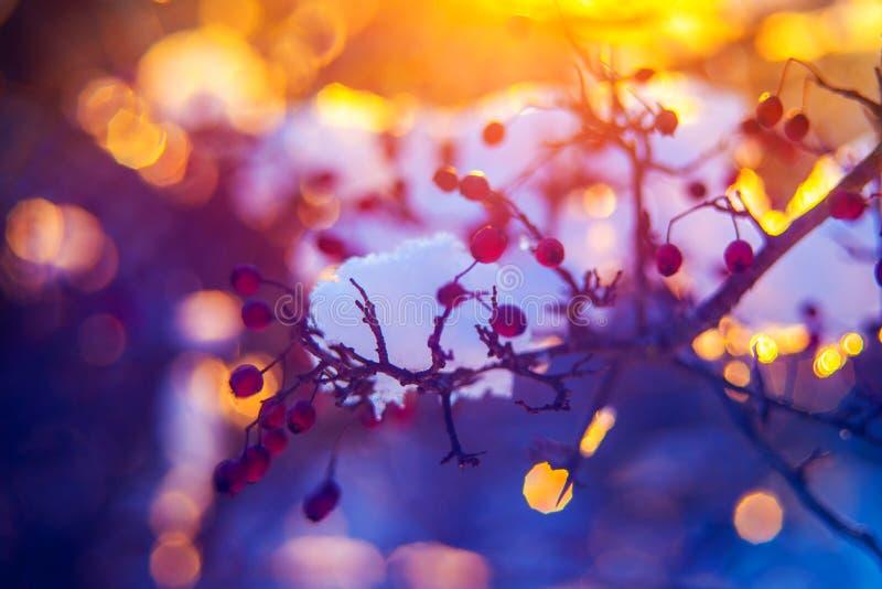 Primer del aire libre del invierno imagenes de archivo