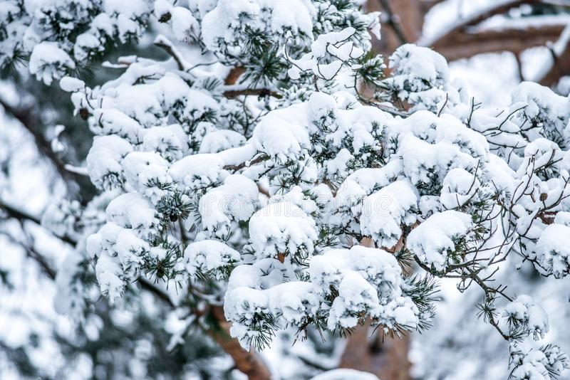 primer del bosque del invierno fotografía de archivo
