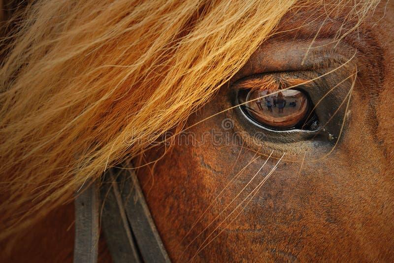 Primer del caballo imagenes de archivo