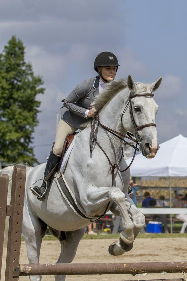 Primer del caballo capón de salto del cazador de la mujer foto de archivo libre de regalías