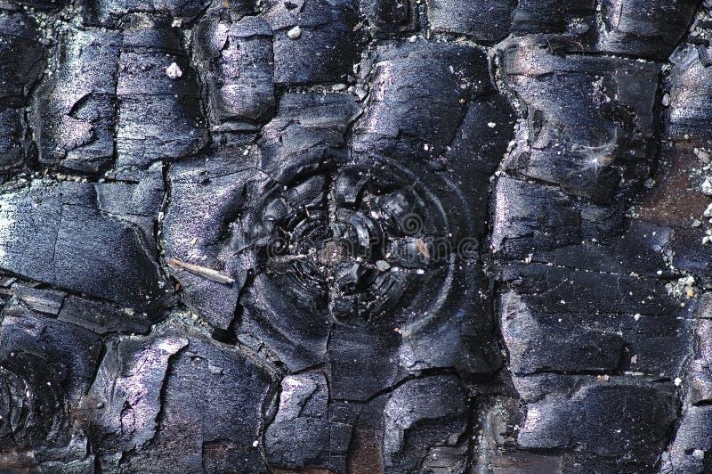 Primer del carbón de leña fotografía de archivo