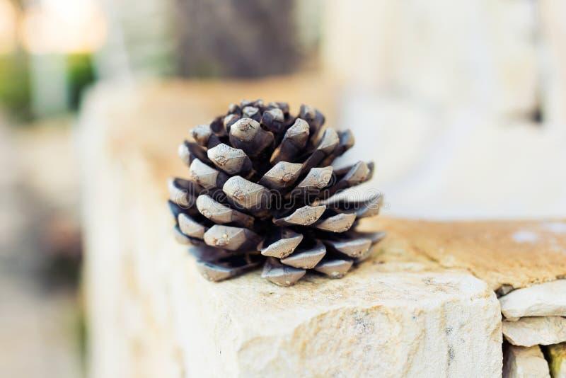 Primer del cono del pino imágenes de archivo libres de regalías
