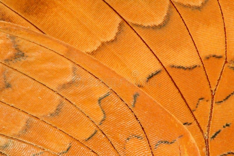 Primer del extremo del ala de la mariposa imagen de archivo libre de regalías
