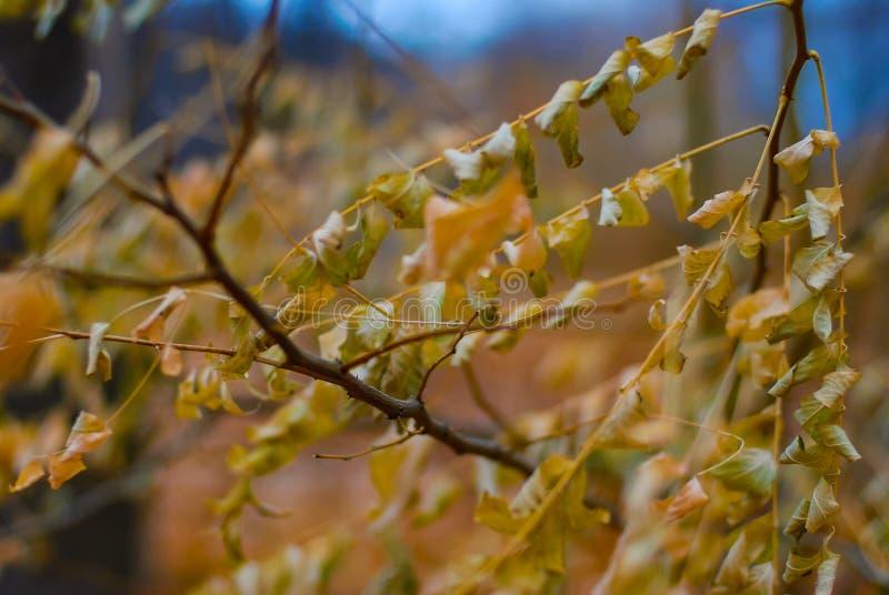 Primer del follaje de oro del otoño con un fondo borroso suave imagenes de archivo