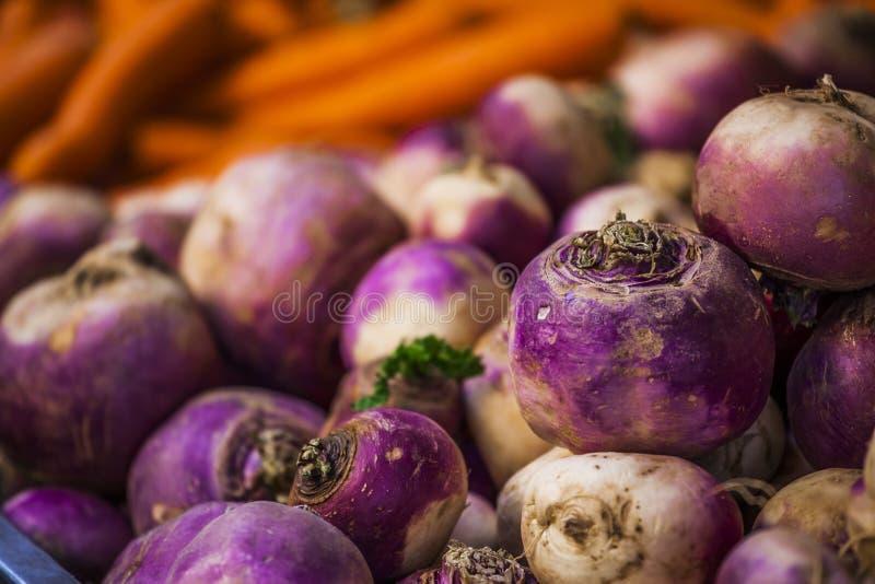 Primer del fondo de la cebolla púrpura y blanca imagenes de archivo