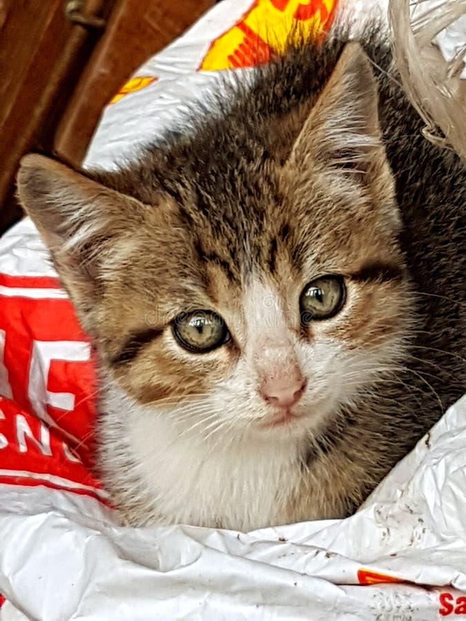 Primer del gatito foto de archivo