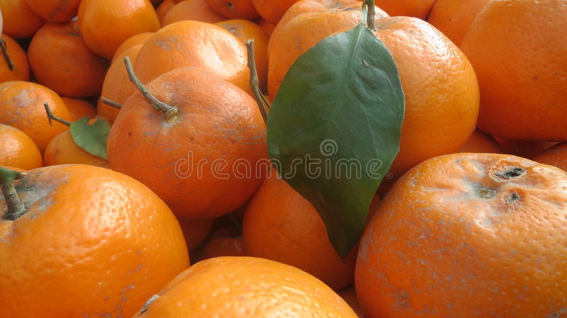 Primer del grupo de naranjas imagen de archivo