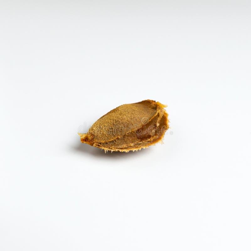 Primer del hueso de albaricoque en una tabla blanca imágenes de archivo libres de regalías
