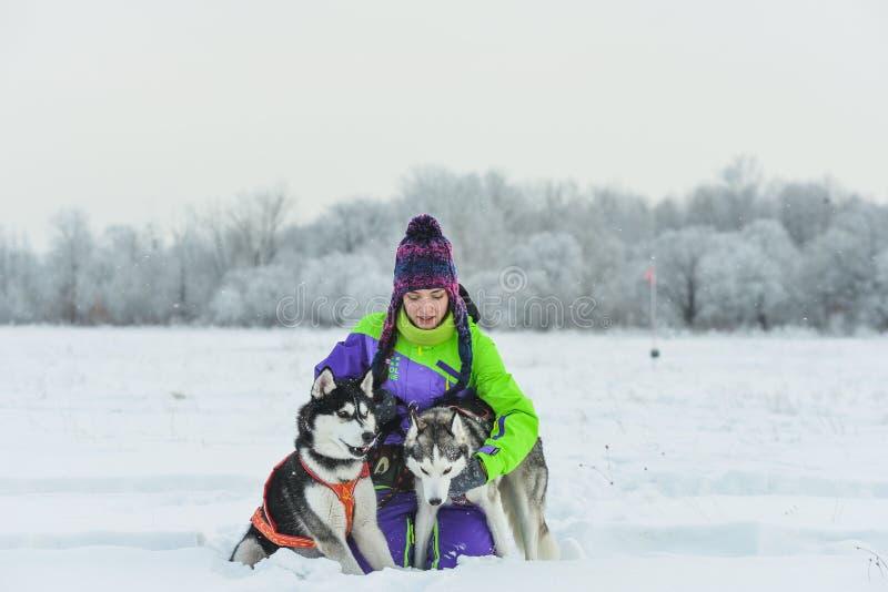 Primer del husky siberiano Muchacha hermosa con el perro esquimal Invierno fotografía de archivo