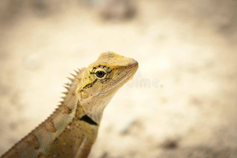 Primer del lagarto en bosque imagen de archivo