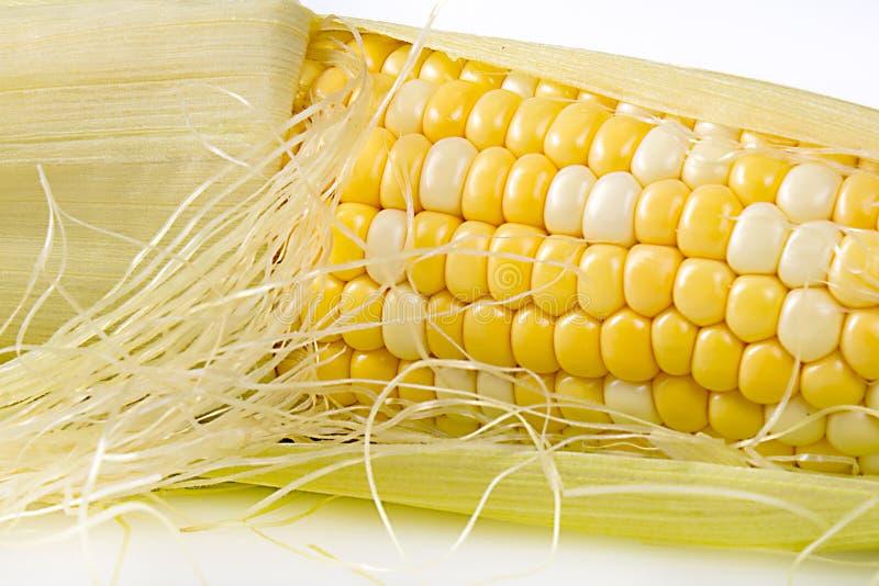 Primer del maíz en la mazorca imagen de archivo