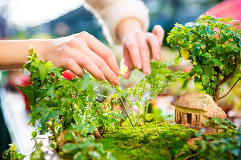 Primer del mini jardín con los pequeños árboles y casa imagenes de archivo