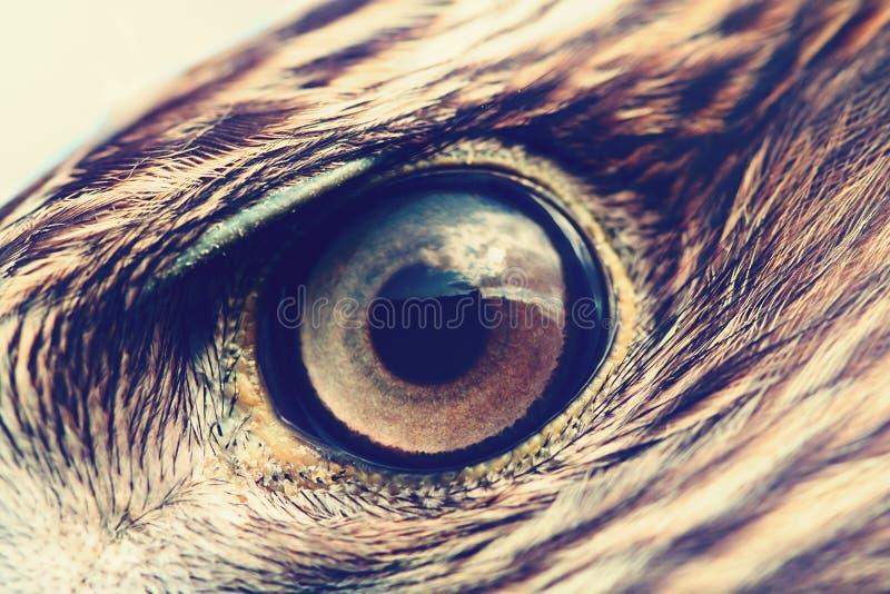 Primer del ojo de Eagle imágenes de archivo libres de regalías