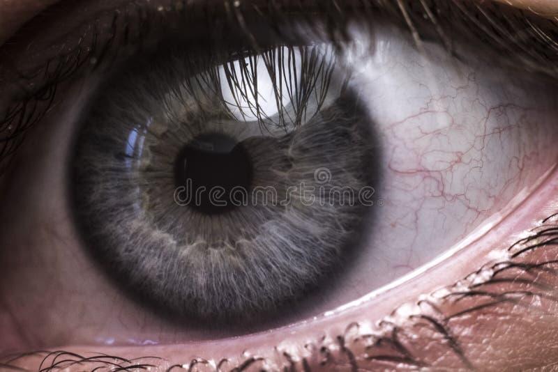 Primer del ojo humano azul foto de archivo