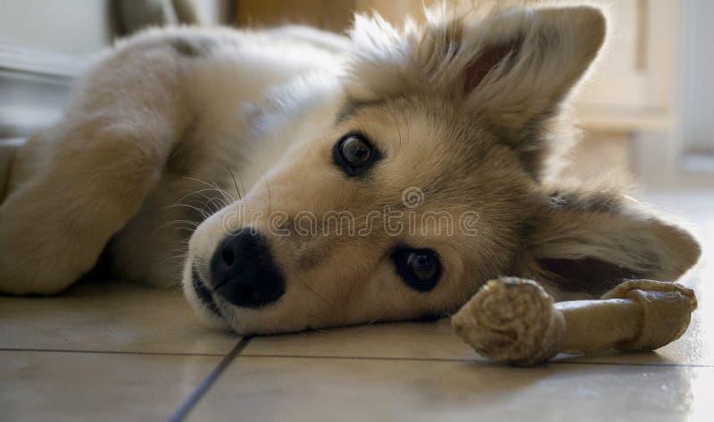Primer del perrito imagen de archivo libre de regalías