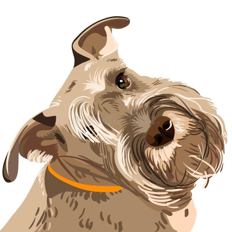 Primer del perro del Schnauzer miniatura de la casta del vector libre illustration