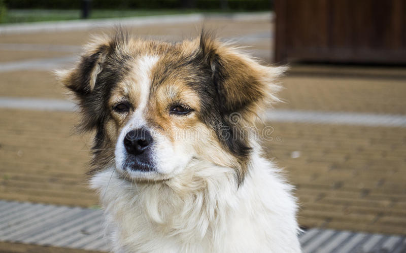 Primer del perro perdido imagen de archivo libre de regalías