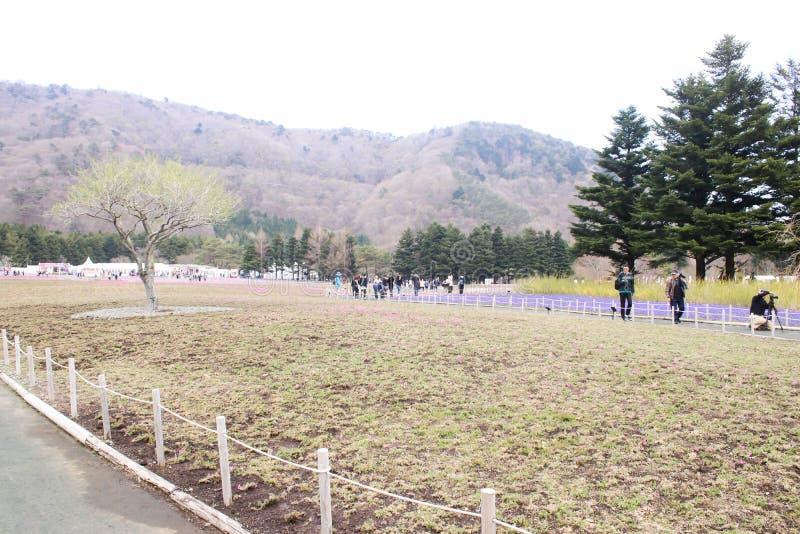 Primer del primero plano rosado del musgo en el festival y la montaña Yamanashi, Kawaguchiko, Japón del shibazakura fotografía de archivo libre de regalías