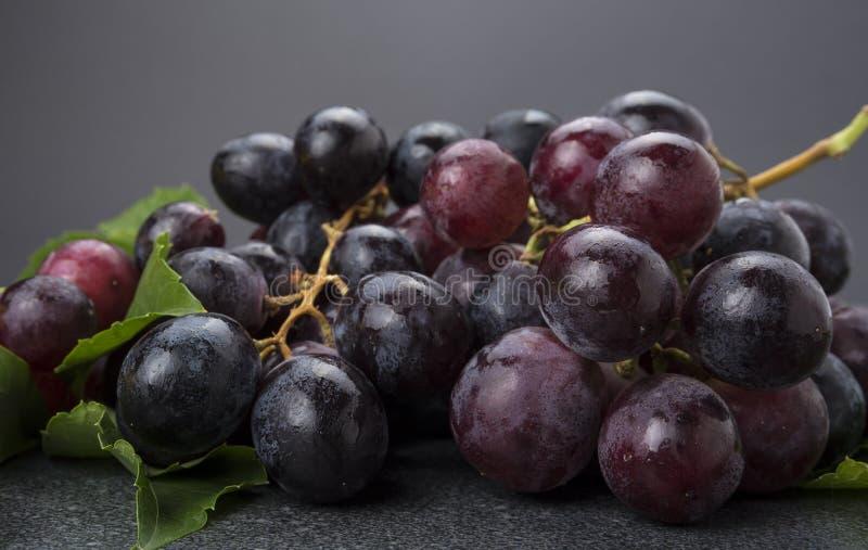 Primer del racimo de uvas negras en fondo oscuro fotografía de archivo libre de regalías
