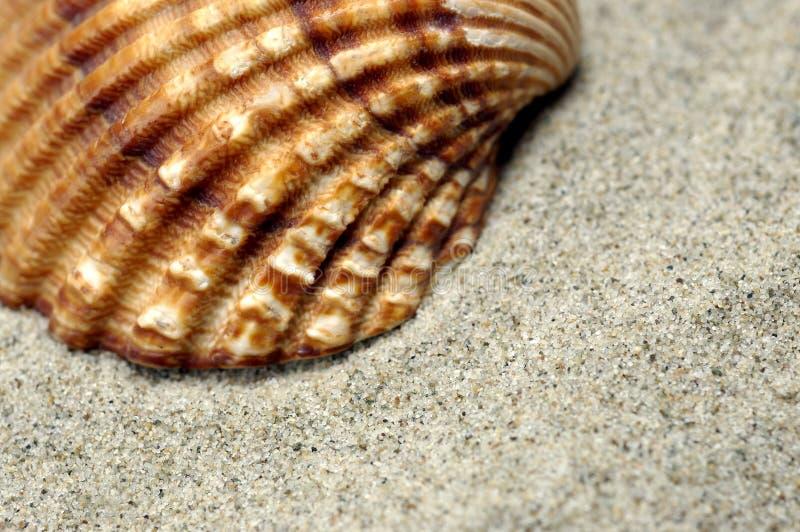 Primer del shell del mar foto de archivo libre de regalías