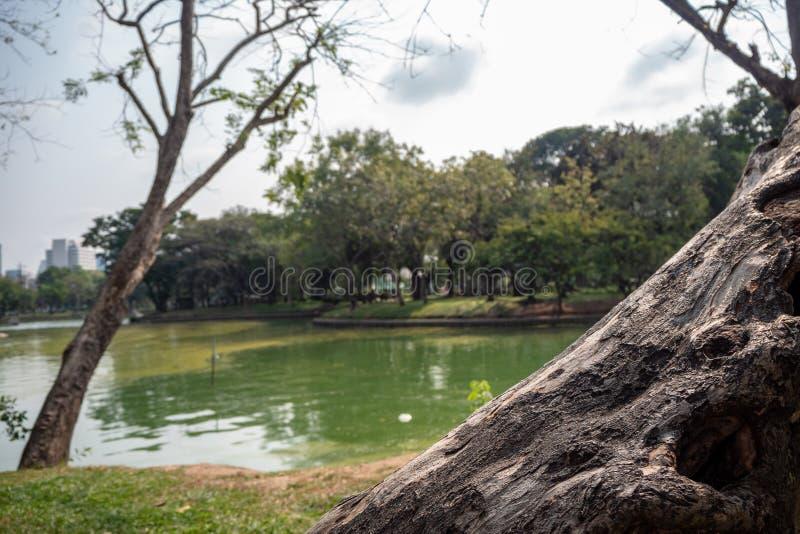 Primer del tronco de árbol grande en fondo del parque público borroso y del cielo nublado fotos de archivo libres de regalías