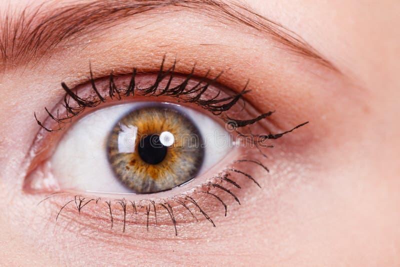 Primer detallado del ojo colorido de la mujer imagenes de archivo