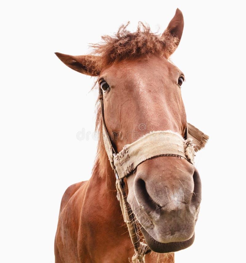 Primer divertido de un caballo - granangular imagenes de archivo
