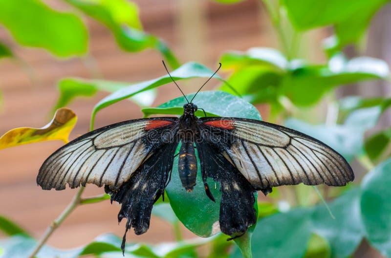 Primer en butterlfy tropical fotografía de archivo libre de regalías
