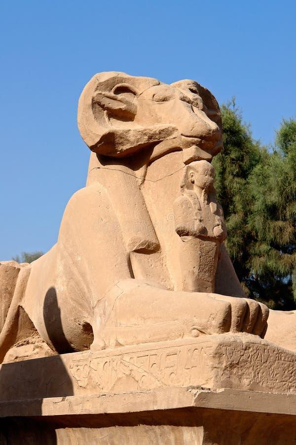 Primer en esfinge RAM-dirigida en el templo de Karnak - Luxor, Egipto imagenes de archivo