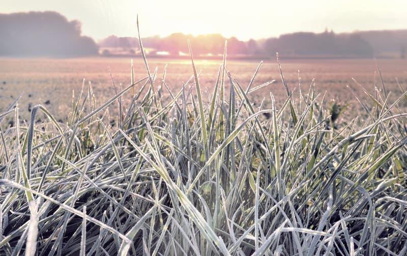Primer en la hierba cubierta con helada imagen de archivo libre de regalías