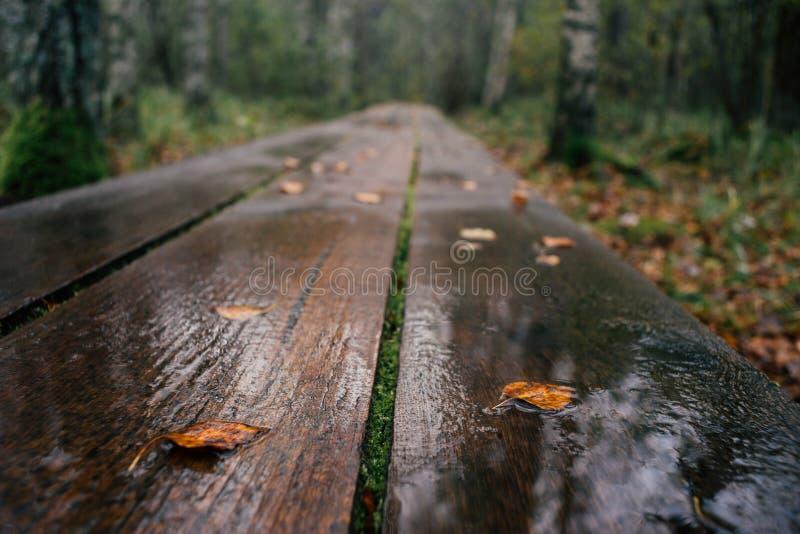 Primer en la pista de senderismo del tablón mojada después de lluvia fotos de archivo libres de regalías