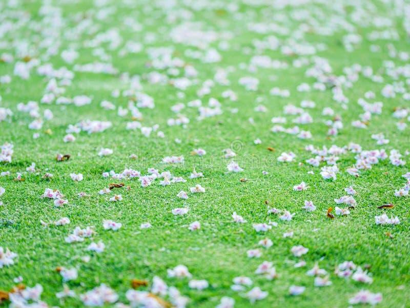 Primer en los flores en putting green Concepto borroso serie fotos de archivo