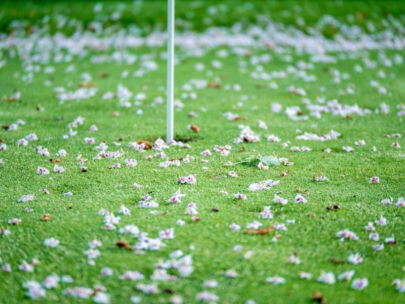 Primer en los flores en putting green Concepto borroso serie fotos de archivo libres de regalías