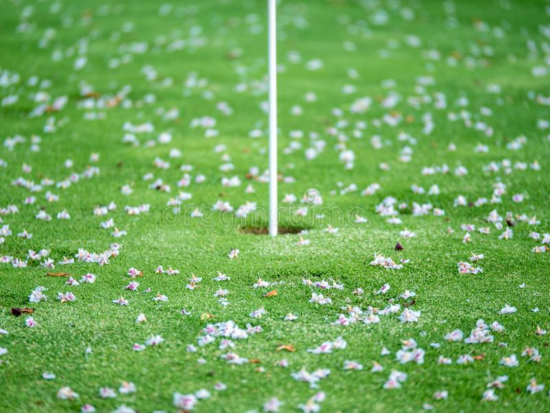 Primer en los flores en putting green Concepto borroso serie imagen de archivo libre de regalías