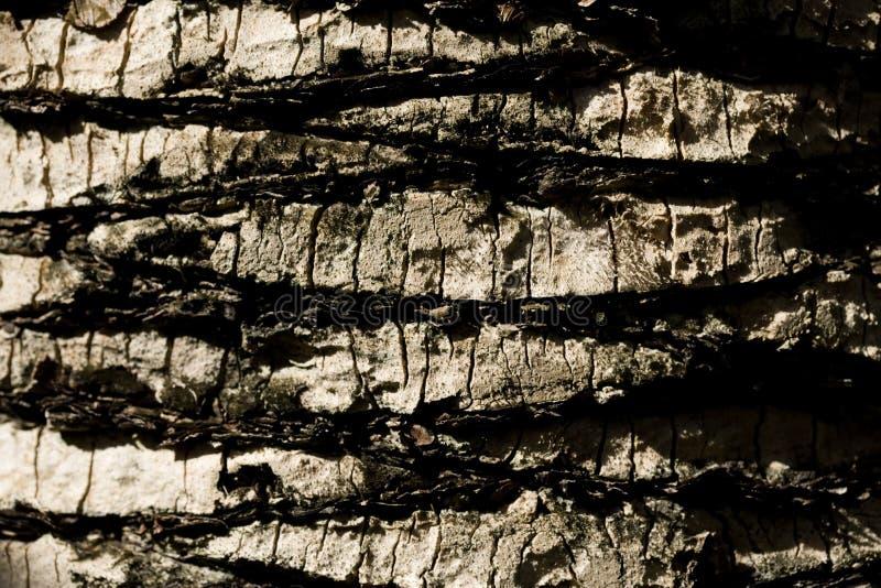 Primer extremo en el árbol de corteza fotografía de archivo