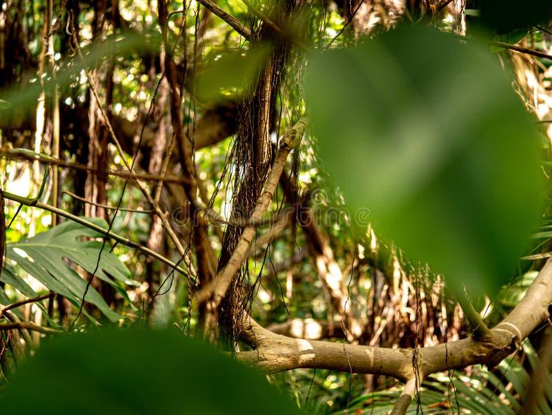 Primer fantástico de un bosque con la hoja en primero plano fotografía de archivo libre de regalías