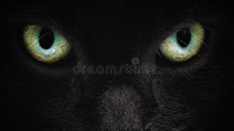 Primer gris de la cara del gato con los ojos verdes imagen de archivo libre de regalías