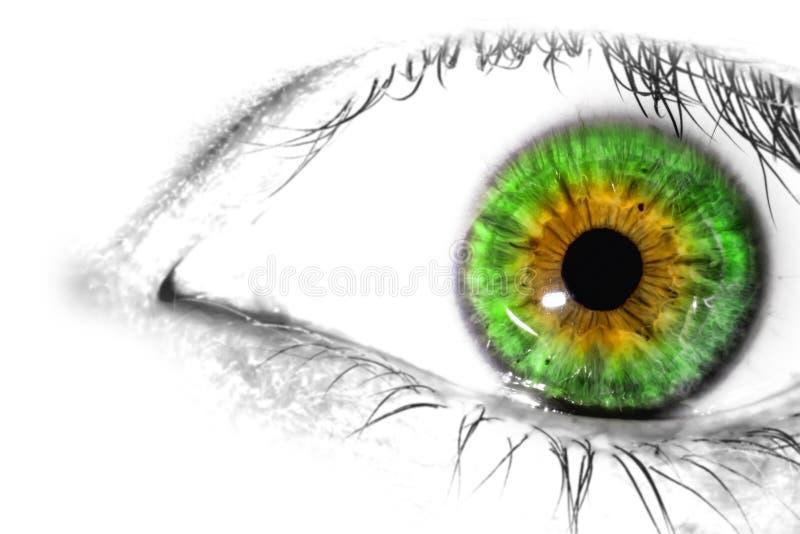 Primer macro colorido del ojo humano en el fondo blanco imagen de archivo