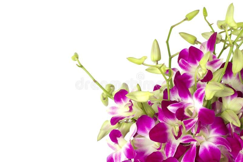 Primer púrpura de las orquídeas. imagen de archivo libre de regalías