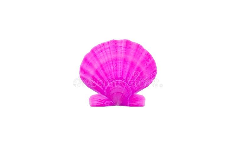 Primer redondo rosado púrpura brillante ligero de la concha marina de la perla en pizca foto de archivo libre de regalías