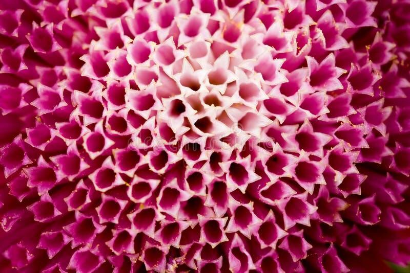 Primer rojo de la flor imagenes de archivo