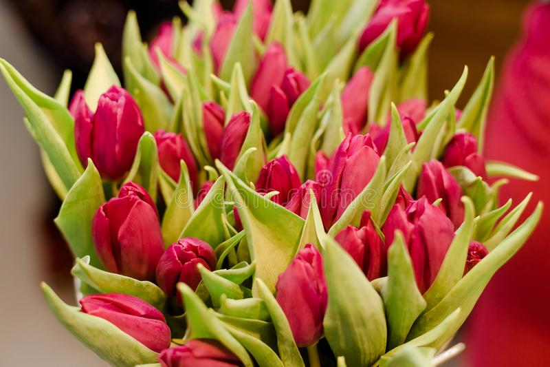 primer Rojo-rosado de los tulipanes, ramo grande de flores en el interior fotos de archivo