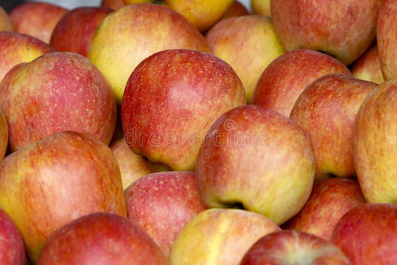 Primer, rojo y amarillo de las manzanas foto de archivo