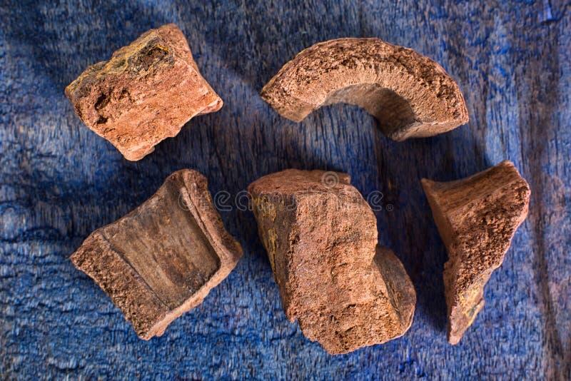 Primer secado spirax también llamado de la raíz de Zarzaparilla foto de archivo libre de regalías