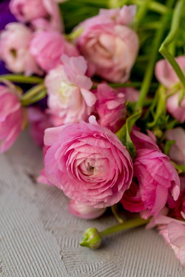 Primer tirado de ranúnculo rosado fotografía de archivo