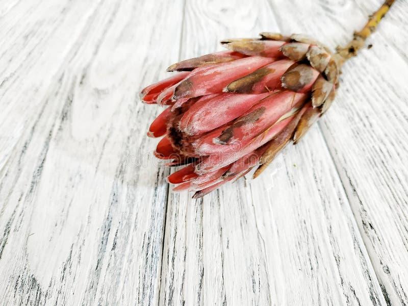Primer tropical hermoso del protea de la flor en fondo de madera foto de archivo