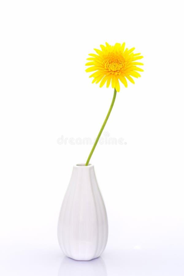 Primer una flor amarilla de la margarita del gerbera en florero foto de archivo libre de regalías