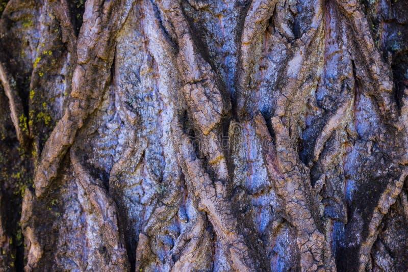 Primer viejo del tronco de árbol fotografía de archivo