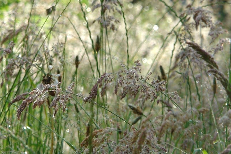 Primer y detalle en hierbas en prado salvaje imagenes de archivo
